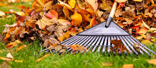 Fall Cleanup 101